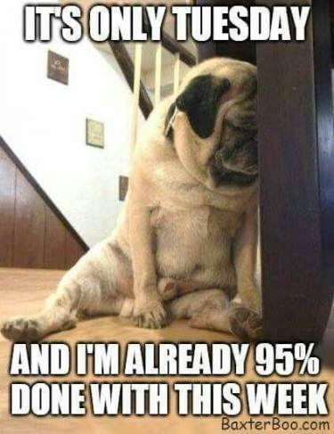 Tuesday Meme Work : tuesday, Trendy, Humor, Tuesday, Mornings, Ideas, #humor, 176203404159135454, Meme,, Humor,, Happy