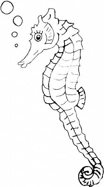 Bellissimo Cavalluccio Marino Disegno Da Colorare Categoria Mare