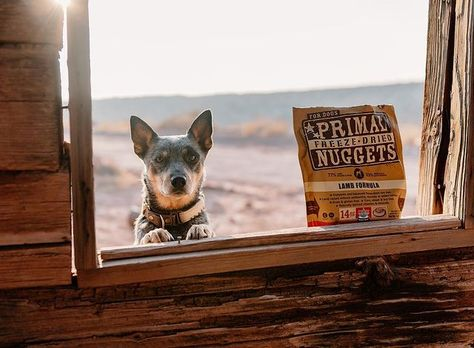 Going somewhere? 🥾🗺️ Primal Freeze-Dried Nuggets are nutritious and shelf-stable, making them perfect for those spur of the moment adventures. Isn't that right, Bruce? 📸 : @red.and.the.blue.duo #onthego #adventuredogs #lifeliferaw