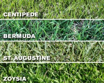 Types of Sod Grass For Lawn in Texas - How to Install Sod