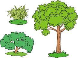 Imagen De Arbol Arbusto Y Hierba Buscar Con Google Plantas Arbustos Arbustos Clasificacion De Las Plantas
