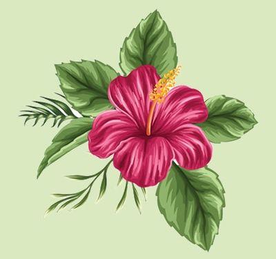 Para hibisco pressão arterial flores de de chá