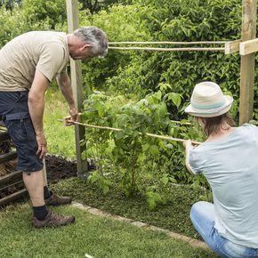 Rankhilfe Fur Himbeeren Selber Bauen Rankhilfe Selber Bauen Garten Garten Pflanzen