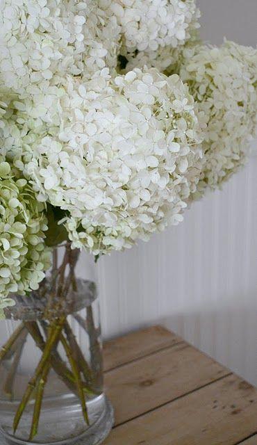 ...white hydrangea,my favorite!