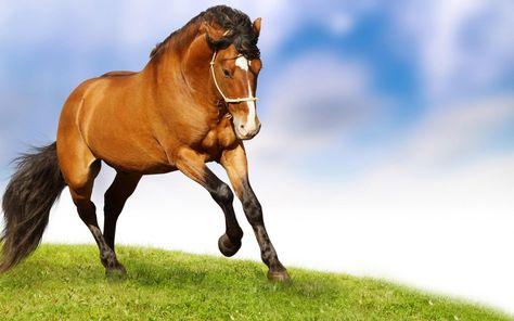 Red Horse Wallpaper Widescreen Hd Free Download Horses Horse