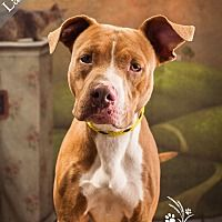 Pin By Lisa Akins On Furry Orphans Pitbull Terrier Pitbulls
