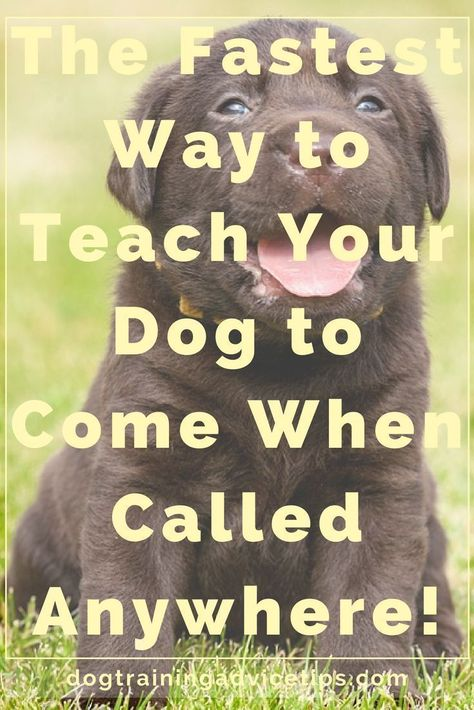 Most individuals fall short at pet training given that they haven't correctly prepared themselves. #dogtraining