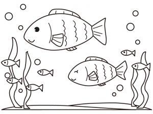 最高の壁紙 50歳以上 魚 イラスト 塗り絵 魚イラスト イラスト 塗り絵 塗り絵