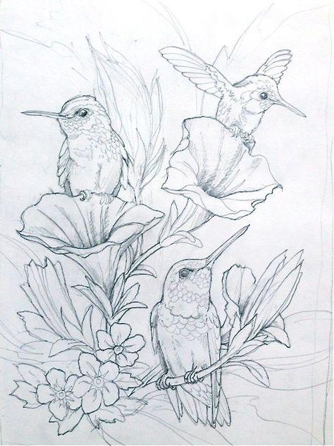 bergsman  vogel malvorlagen vögel zeichnen skizzierung