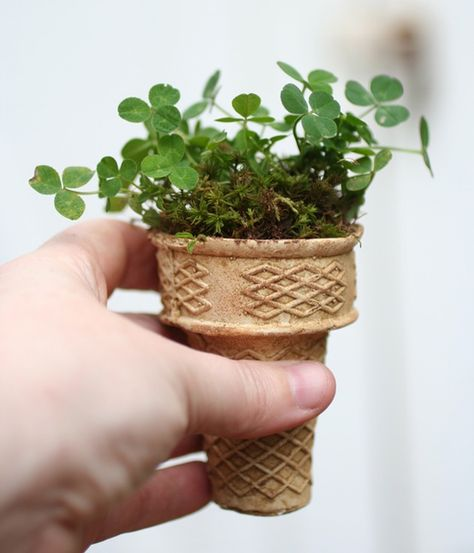 start seeds in ice cream cones and plant in to ground...how clever, biodegradable