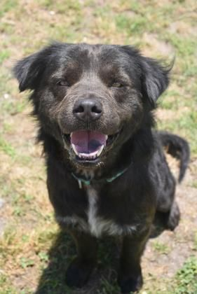 Adopt Opie On Pets Needing Home In South Carolina Dogs Chow