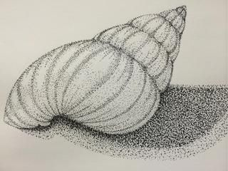 Line Drawing With Shading : Drawings of sea shells google search value study