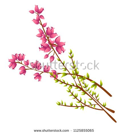 Vector Icon Of Calluna Vulgaris Heather Or Ling The Native Flower Of Norway Isolated Elements On White Background Perfect Vector Icons Vector Vector Images
