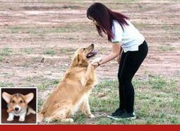 Dog Training Collars Stop Barking And Potty Training For Dogs In