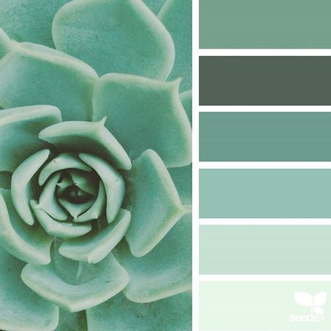 today's inspiration image for { succulent hues } is by @thebungalow22 ... thank you, Steph, for another fresh + inspiring #SeedsColor image share!
