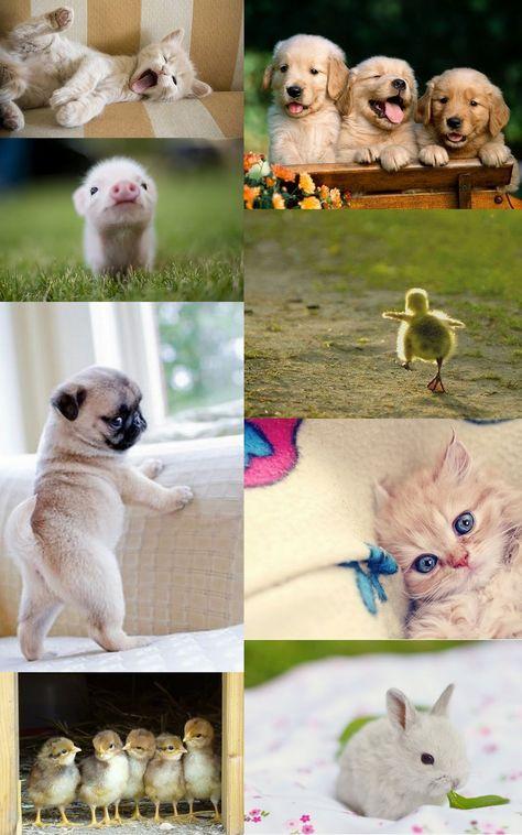 Babies Jpg 1 000 1 600 Pixels Baby Animals Cute Animal Photos Cute Animals