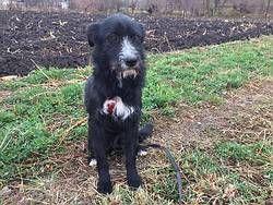 Tiere In Not Seite Hunde Aus Rumanien Dog Adoption Pet Adoption Animal Projects