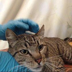 Saving Shelter Pets Inland Empire In San Bernardino California In 2020 Kitten Adoption Puppy Adoption Cat Adoption
