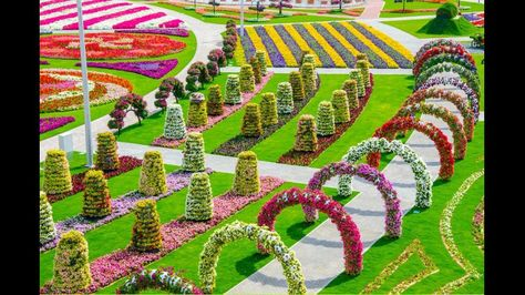 DUBAI Miracle Garden: The world's biggest natural flower garden. Located in Dubailand near the Arabian Ranches and opened on Valentine's Day, Dubai Miracle Garden contains over 45 million flowers over a sq metre site