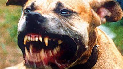 Αποκάλυψη Το Ένατο Κύμα: Οι 10 πιο επικίνδυνες ράτσες σκύλων