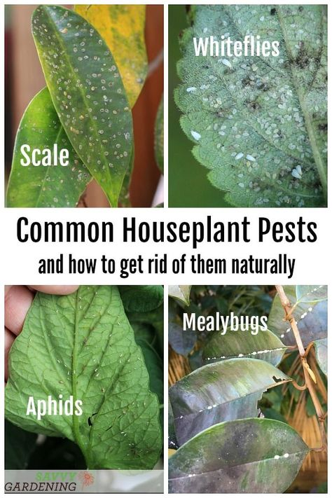 Types Of Houseplant Bugs Who They Are And What To Do About Them