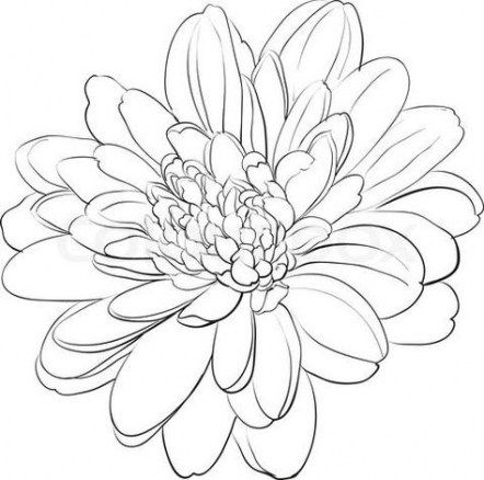 52 New Ideas Flowers Drawing Simple Cute In 2020 Chrysanthemum Drawing Flower Drawing Chrysanthemum Tattoo