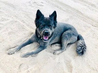 Read About Huck A Rescue Dog Adopted From A Kill Shelter In The Us Now Loving His Beach Life In Australia Dogs Dog Stories Rescue Dogs