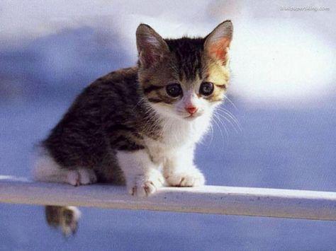 So Cute I Love This Littel Kitty Kittens Cutest Cute Animals Baby Animals