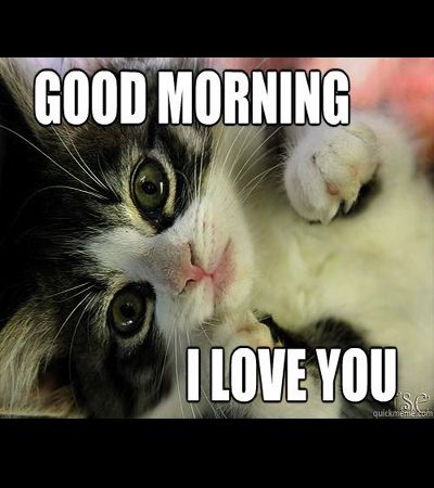 100 Funny Good Morning Memes Memes Of Good Morning Funny Good Morning Memes Morning Memes Good Morning My Love