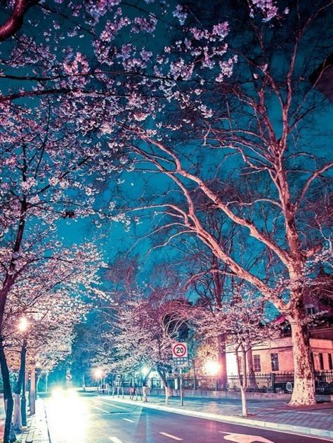 Japanese Cherry Blossoms Night Pinterest Hashtags Video And Cherry Blossom Tree Wallpaper Wallpapers Craft Ani Scenery Wallpaper Pastel Scenery Anime Scenery Cherry blossom night anime wallpaper