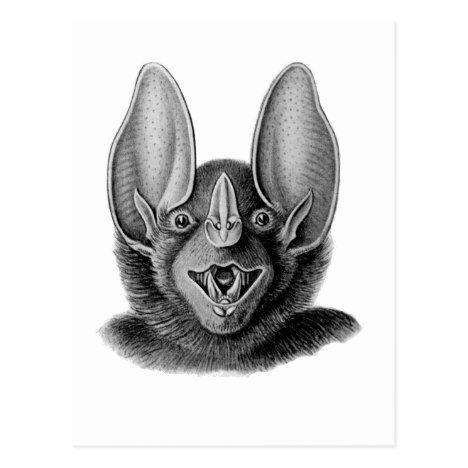 False Vampire Bat Postcard Zazzle Com With Images Animal