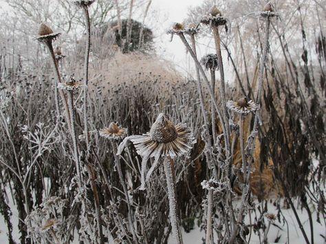 oudolf office garden   Flickr - Photo Sharing!