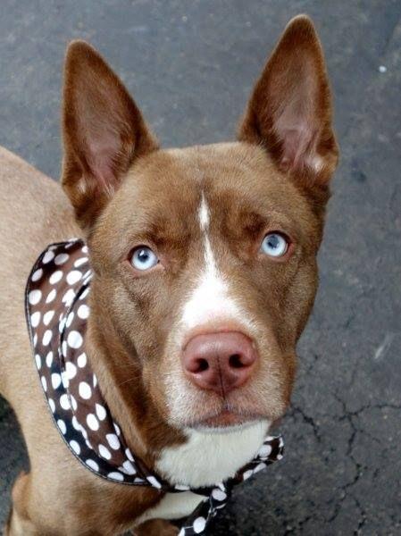 To Be Destroyed 12 5 14 Manhattan Center P Puppy Alert My