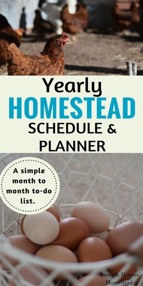 HOMESTEAD GOAL PLANNING with this simple annual homestead schedule & planner. Plan out your homestead year with this simple list of monthly to-do projects. homesteading for beginners Homestead Survival, Homestead Farm, Homestead Gardens, Farm Gardens, Survival Skills, Homestead Living, Survival Prepping, Outdoor Gardens, Homestead Layout