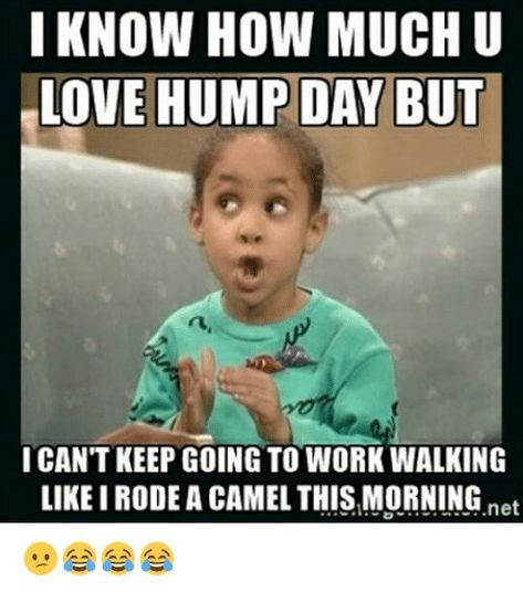 19 Funny Hump Day Memes