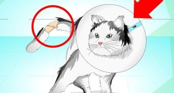 Deiner Katze Im Sommer Kuhlung Verschaffen Katzen Katzen