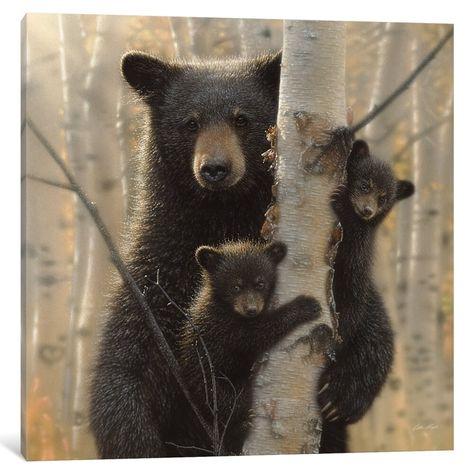 """iCanvas """"Mama Black Bear, Square"""" by Collin Bogle (37'' x 37'' x 0.75'')"""
