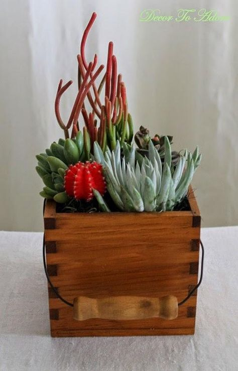 A unique succulent container-- a thrift store drawer container!