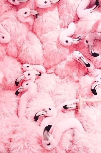 Cheap Sale 60 Off Visit Fashion Pink Flamingos Everything Pink Pastel Pink Aesthetic