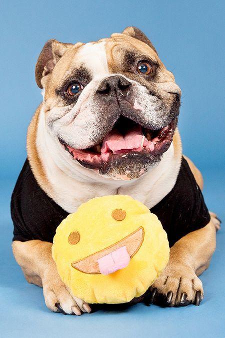 Bark Tongue Face Emoji Ball Dog Toy Dog Toys Pet Accessories Pets