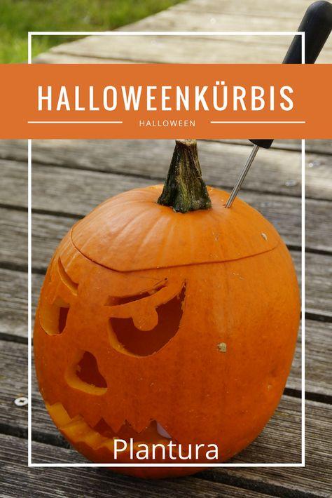 Einen Kürbis für Halloween zu schnitzen ist gar nicht