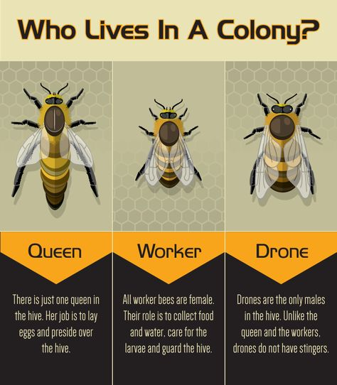 Backyard Bee Keeping: 3 Types of Bees in a Colony