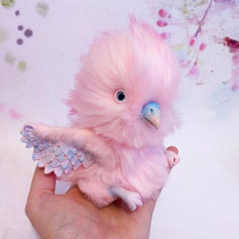 Pink Baby parrot In stock
