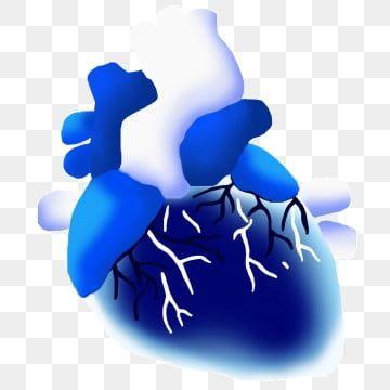 القلب الأزرق القلب الجميل زخرفة القلب القلب التوضيح قلب الجهاز البشري زخرفة القلب Png وملف Psd للتحميل مجانا Heart Decorations Blue Heart Illustration