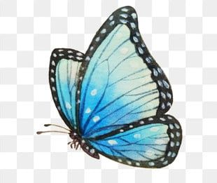 Cyan Butterfly Butterfly With Black Edges Butterfly Illustration Hand Drawn Butterfly Illustration Butterfly Clipart Smart Butterfly Flying Butterfly Png Tra Butterfly Illustration Butterfly Clip Art How To Draw Hands