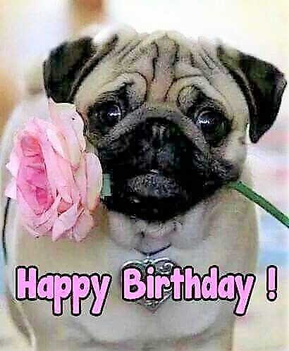 Pin By Nicholas Phillips On Greetings Seasonal Occasional Happy Birthday Pug Happy Birthday Animals Birthday Pug
