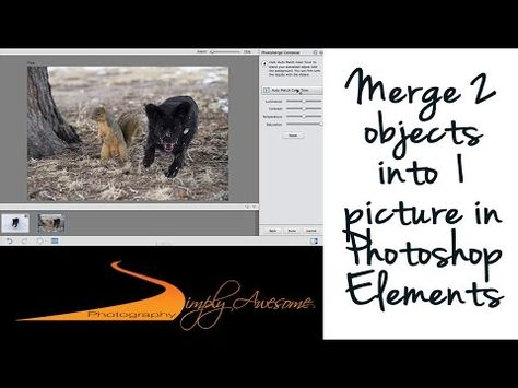 Learn Photoshop Elements - Merge people from two photos into