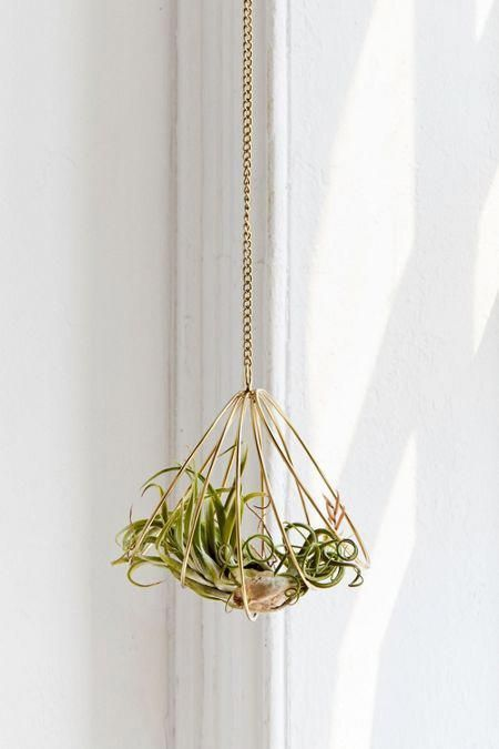 Caged Metal Hanging Air Plant Holder Bathroomplants In 2020 Hanging Air Plants Air Plant Holder Hanging Plants