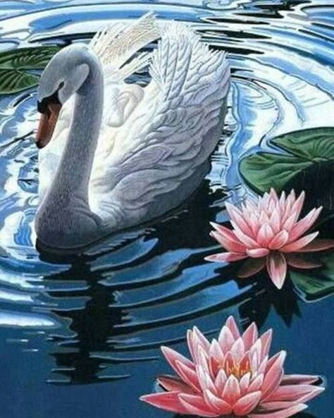 Best 12 Swans and Water Lilies – SkillOfKing.Com