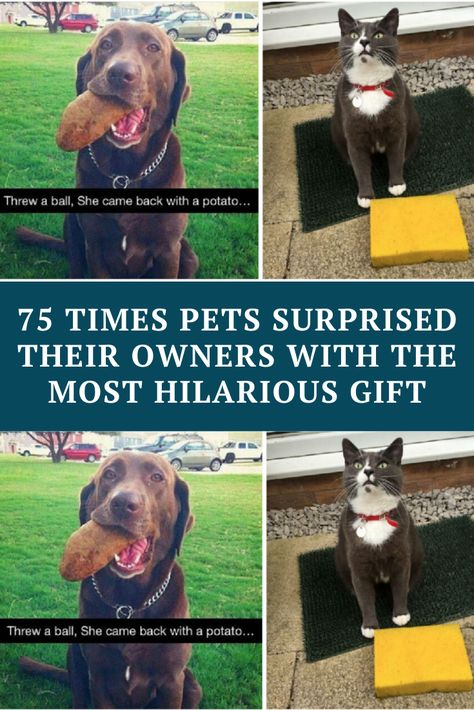70 Times Pets Surprised Their Owners With The Most Hilarious Gift Funny Comedy Funny Funny Memes